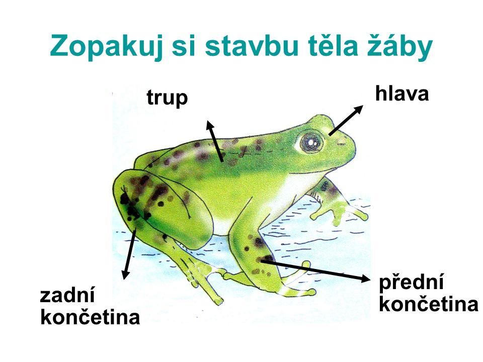 Zopakuj si stavbu těla žáby