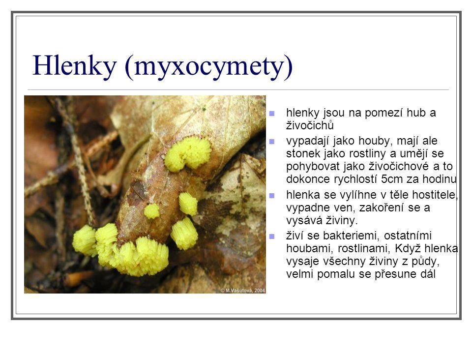 Hlenky (myxocymety) hlenky jsou na pomezí hub a živočichů