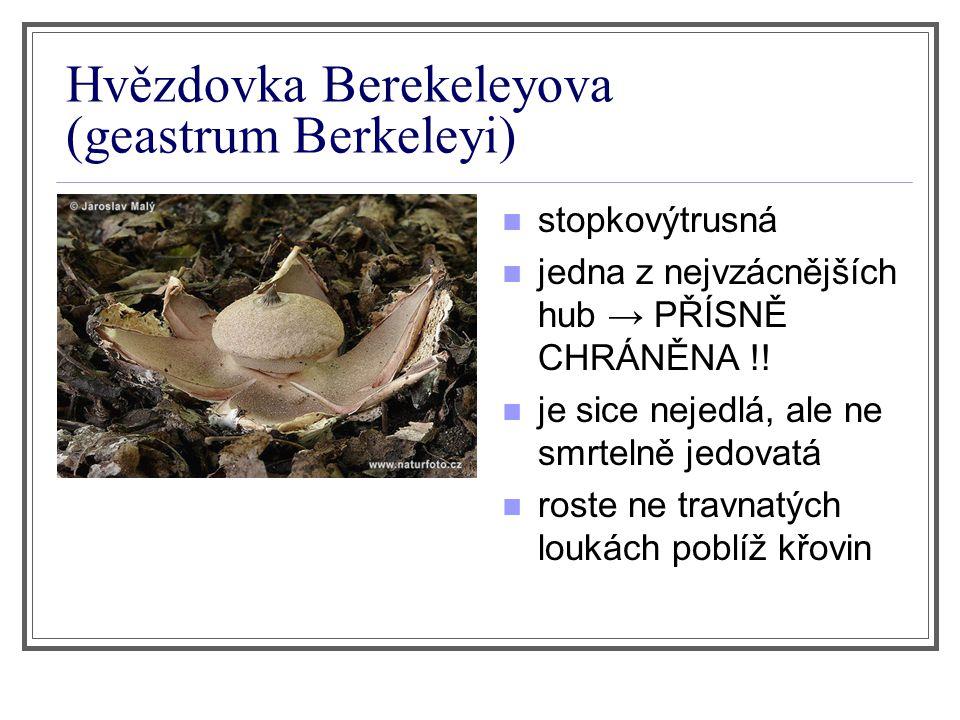 Hvězdovka Berekeleyova (geastrum Berkeleyi)