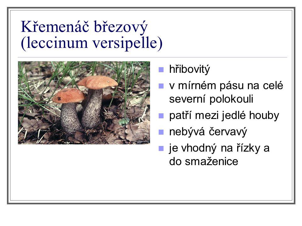 Křemenáč březový (leccinum versipelle)