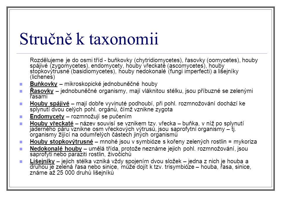 Stručně k taxonomii