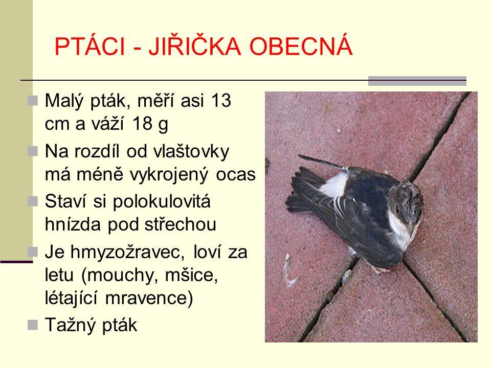 PTÁCI - JIŘIČKA OBECNÁ Malý pták, měří asi 13 cm a váží 18 g
