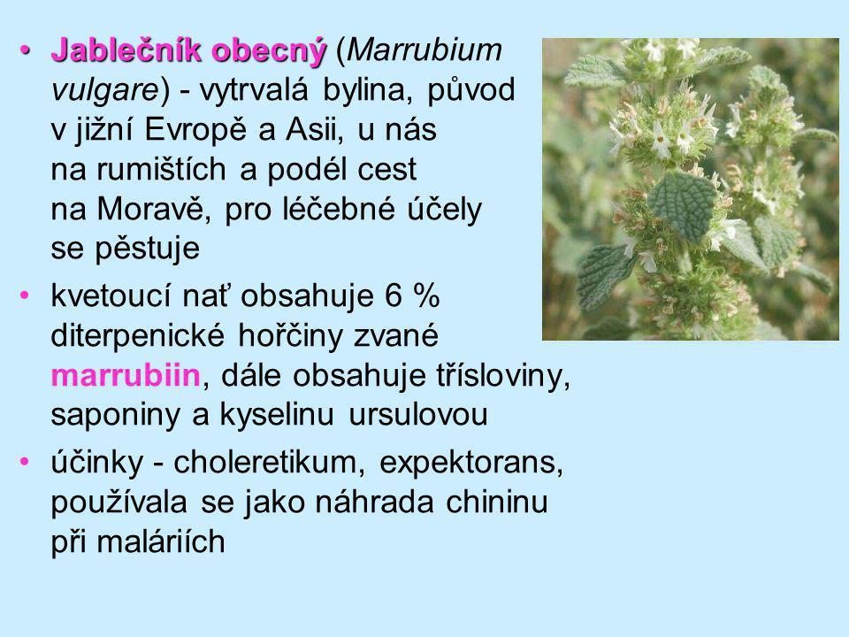 Jablečník obecný (Marrubium vulgare) - vytrvalá bylina, původ v jižní Evropě a Asii, u nás na rumištích a podél cest na Moravě, pro léčebné účely se pěstuje
