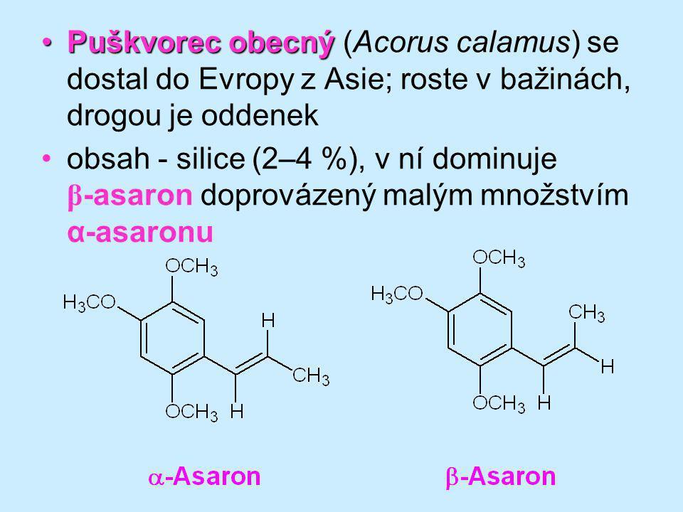 Puškvorec obecný (Acorus calamus) se dostal do Evropy z Asie; roste v bažinách, drogou je oddenek