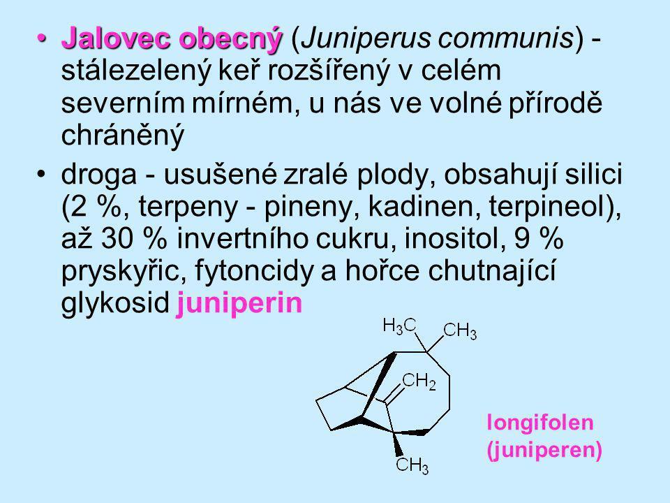Jalovec obecný (Juniperus communis) - stálezelený keř rozšířený v celém severním mírném, u nás ve volné přírodě chráněný