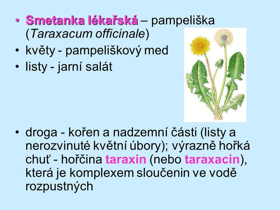 Smetanka lékařská – pampeliška (Taraxacum officinale)