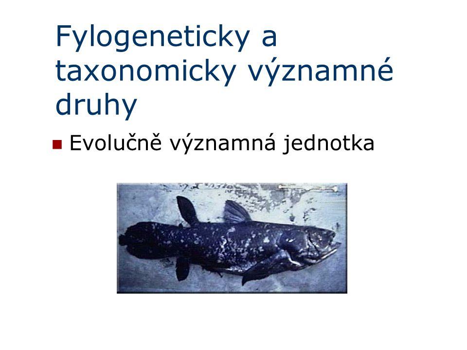 Fylogeneticky a taxonomicky významné druhy