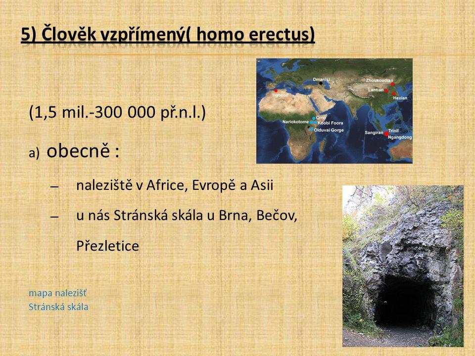 5) Člověk vzpřímený( homo erectus)