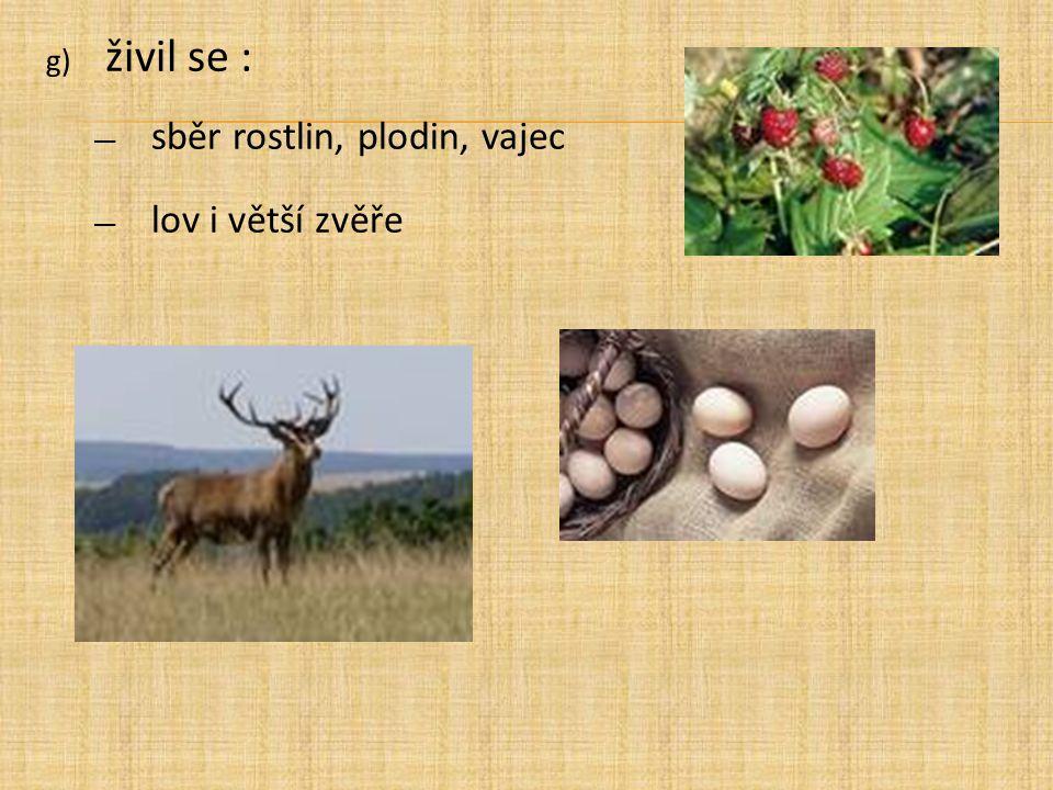 živil se : sběr rostlin, plodin, vajec lov i větší zvěře