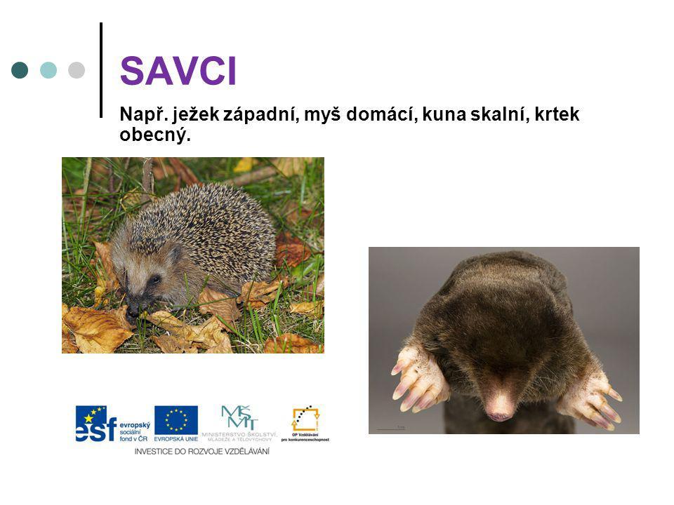 SAVCI Např. ježek západní, myš domácí, kuna skalní, krtek obecný.