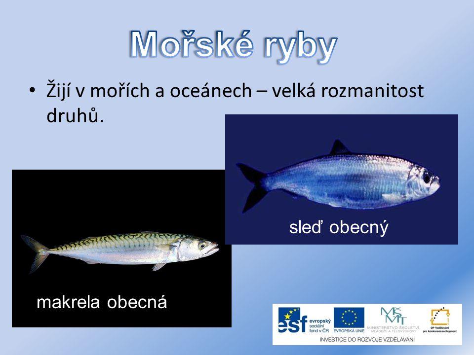 Mořské ryby Žijí v mořích a oceánech – velká rozmanitost druhů.