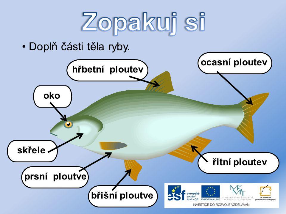 Zopakuj si Doplň části těla ryby. ocasní ploutev hřbetní ploutev oko