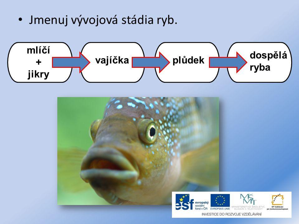 Jmenuj vývojová stádia ryb.