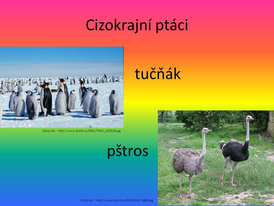 Cizokrajní ptáci pštros tučňák