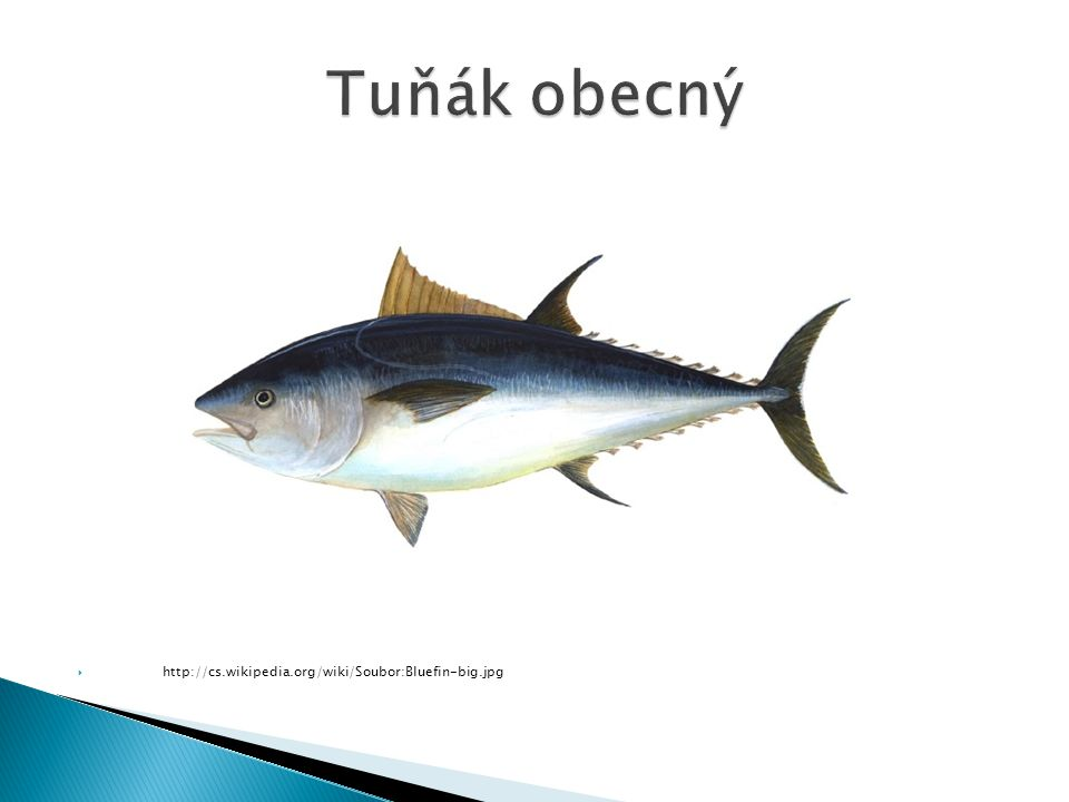 Tuňák obecný http://cs.wikipedia.org/wiki/Soubor:Bluefin-big.jpg
