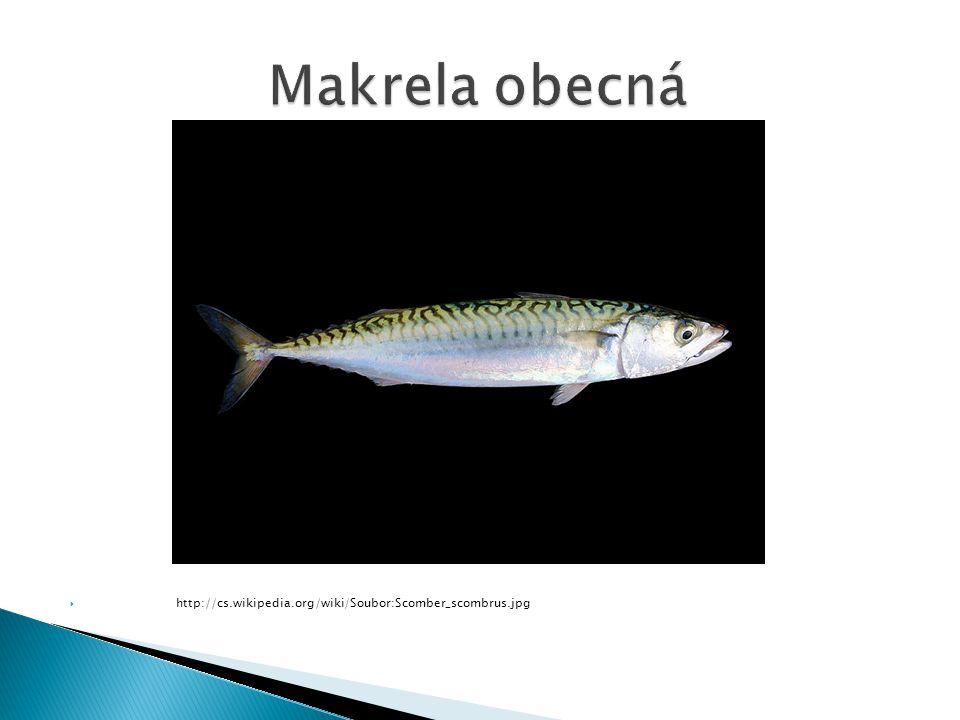 Makrela obecná http://cs.wikipedia.org/wiki/Soubor:Scomber_scombrus.jpg