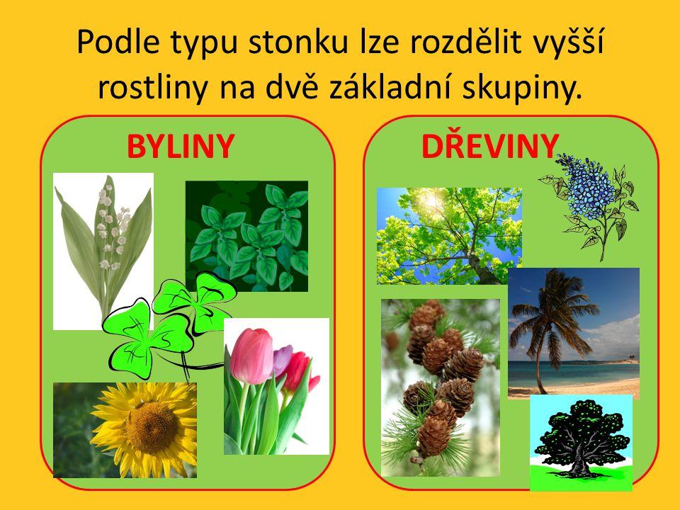 Podle typu stonku lze rozdělit vyšší rostliny na dvě základní skupiny.