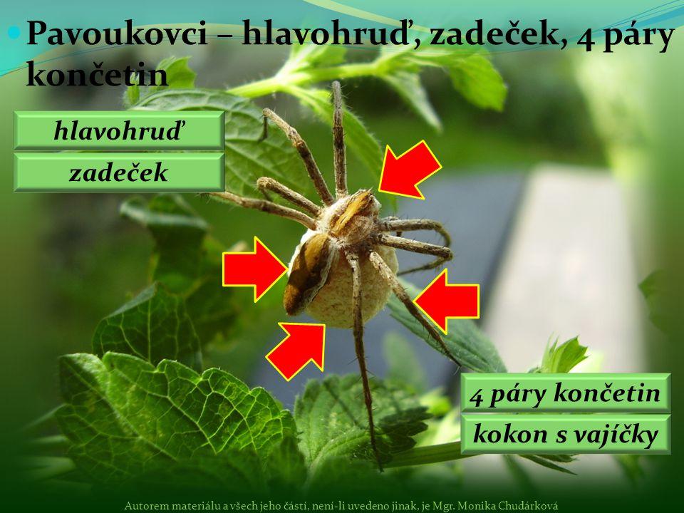 Pavoukovci – hlavohruď, zadeček, 4 páry končetin