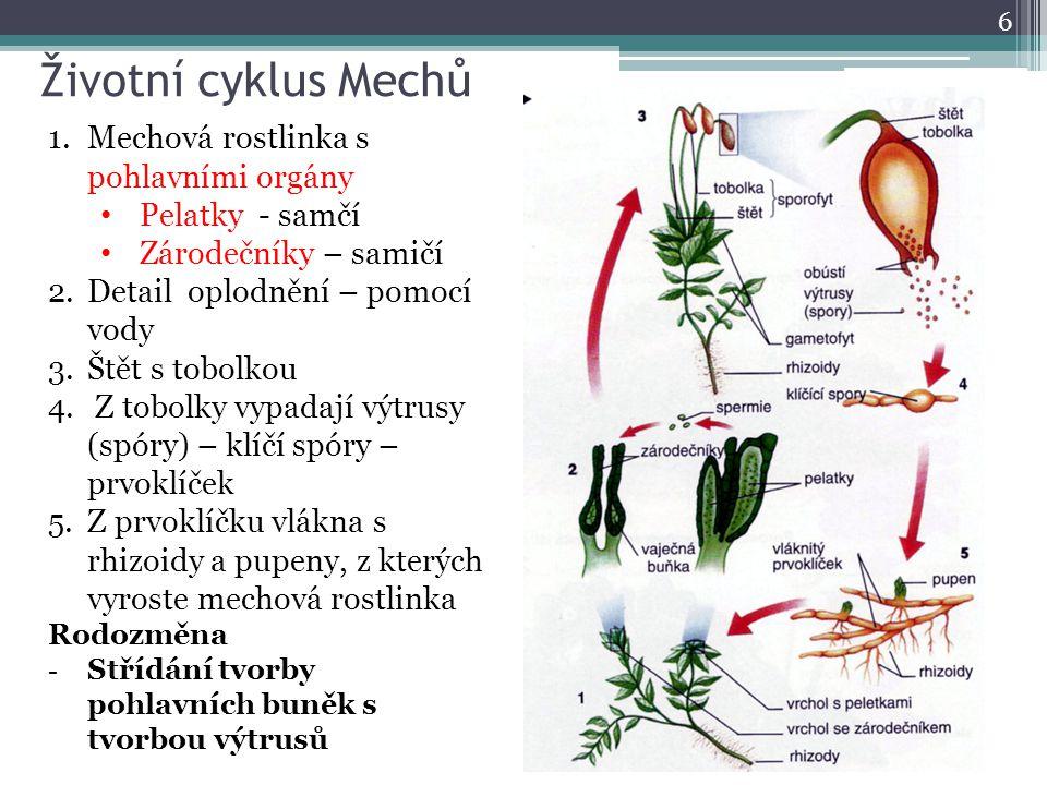 Životní cyklus Mechů Mechová rostlinka s pohlavními orgány