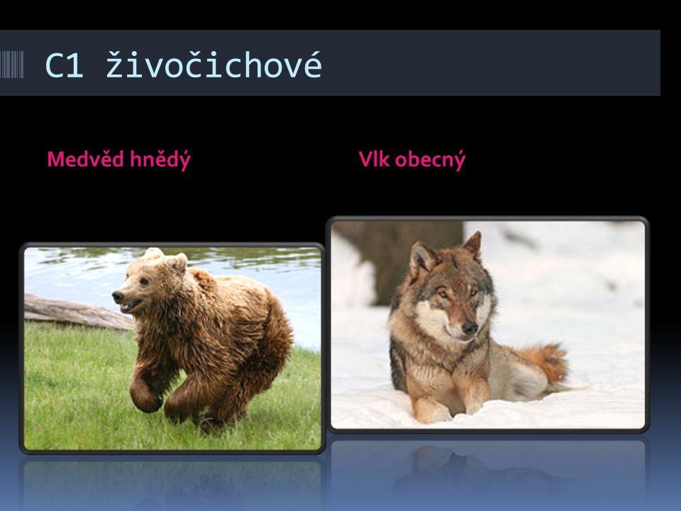 C1 živočichové Medvěd hnědý Vlk obecný