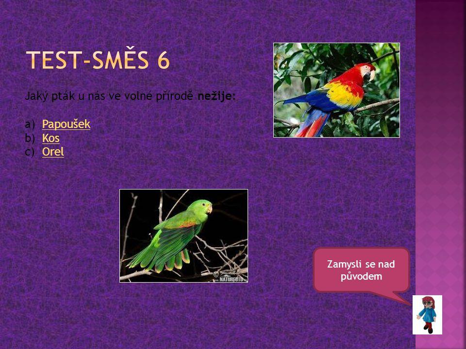 Test-směs 6 Jaký pták u nás ve volné přírodě nežije: Papoušek Kos Orel