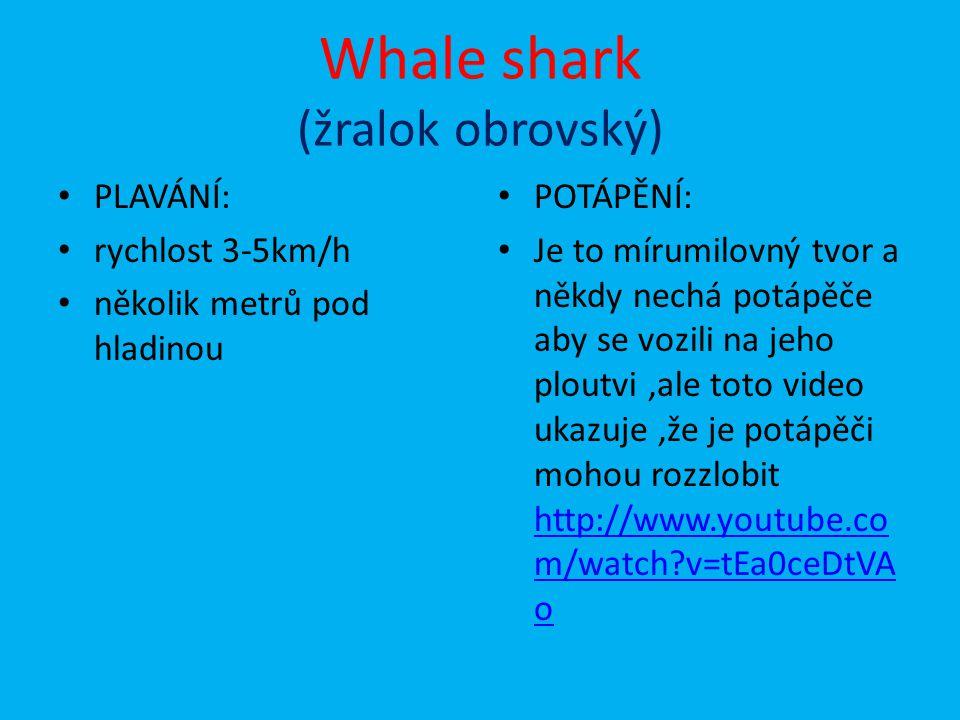 Whale shark (žralok obrovský)