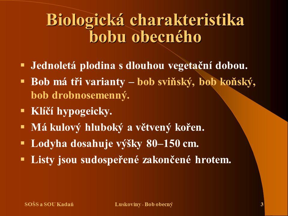 Biologická charakteristika bobu obecného