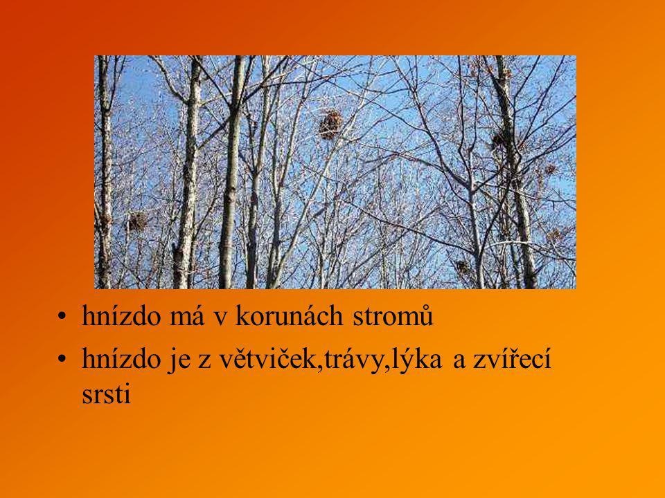 hnízdo má v korunách stromů