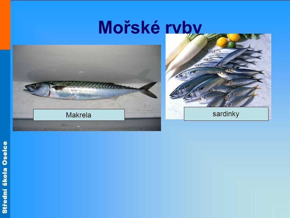 Mořské ryby sardinky Makrela