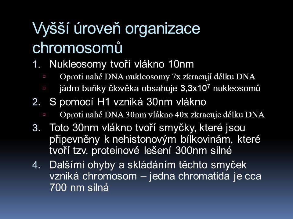 Vyšší úroveň organizace chromosomů