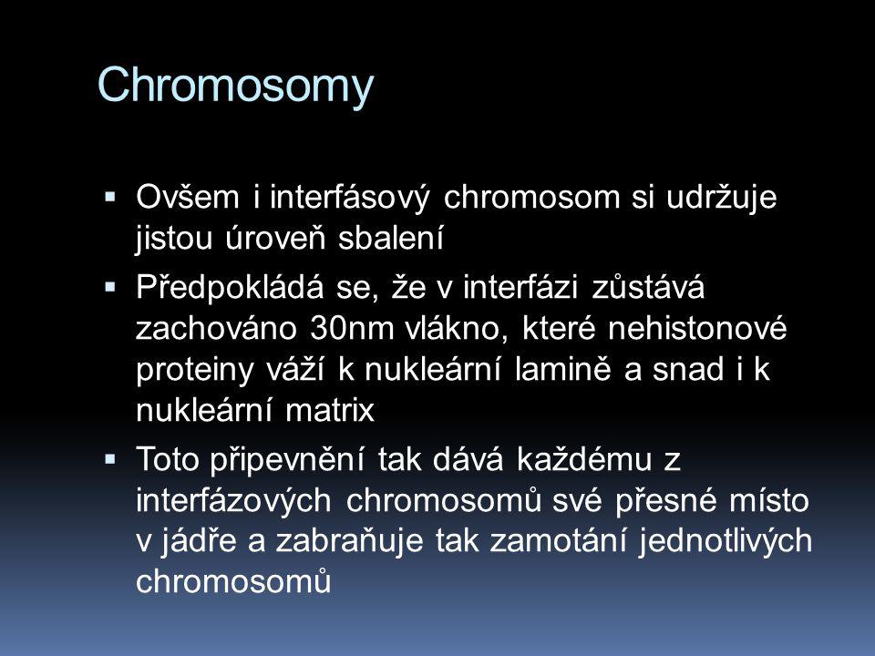 Chromosomy Ovšem i interfásový chromosom si udržuje jistou úroveň sbalení.