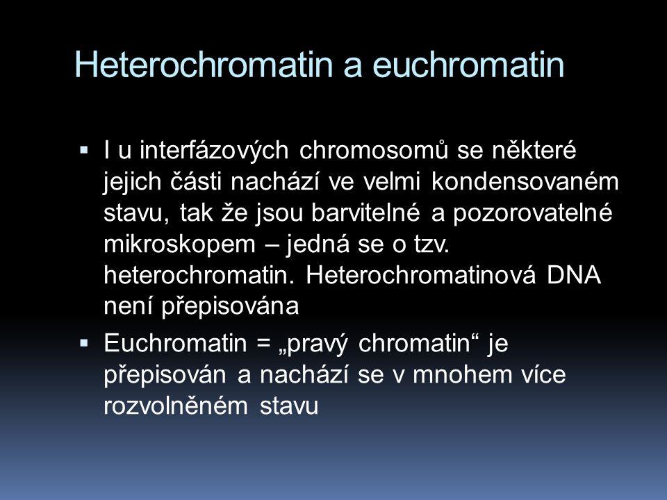 Heterochromatin a euchromatin