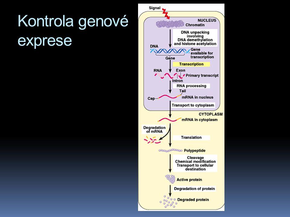 Kontrola genové exprese