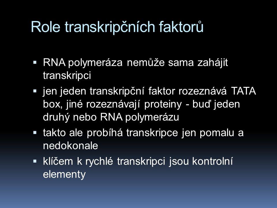 Role transkripčních faktorů