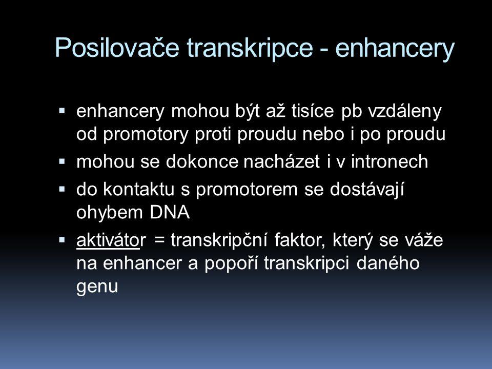Posilovače transkripce - enhancery