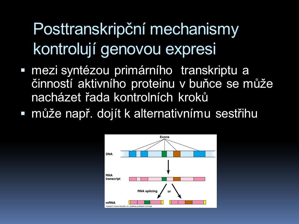 Posttranskripční mechanismy kontrolují genovou expresi