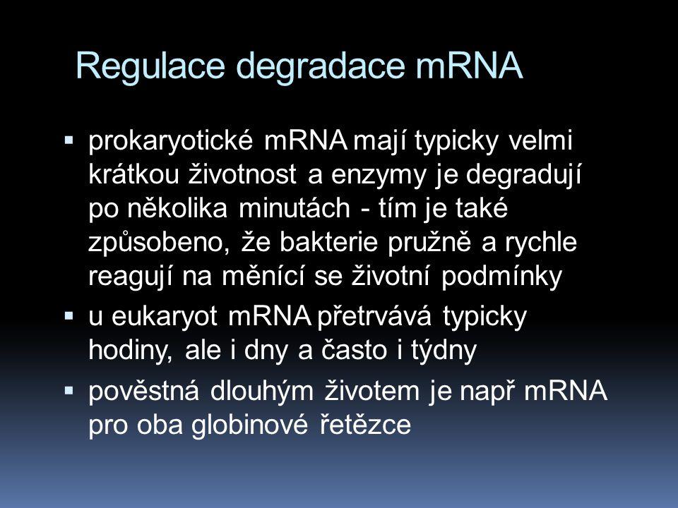Regulace degradace mRNA