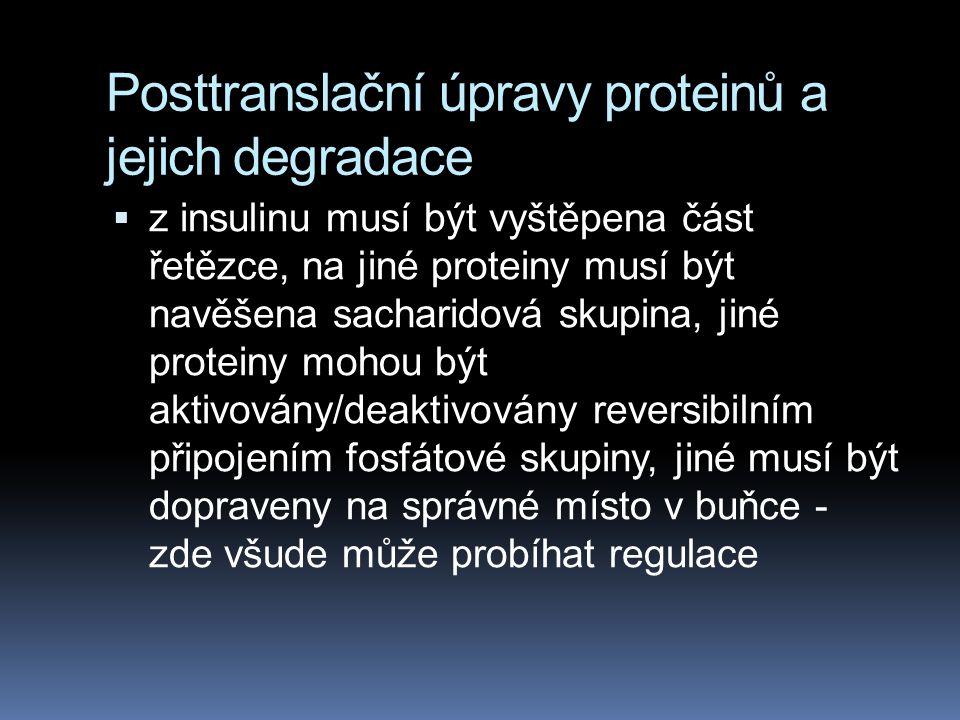 Posttranslační úpravy proteinů a jejich degradace