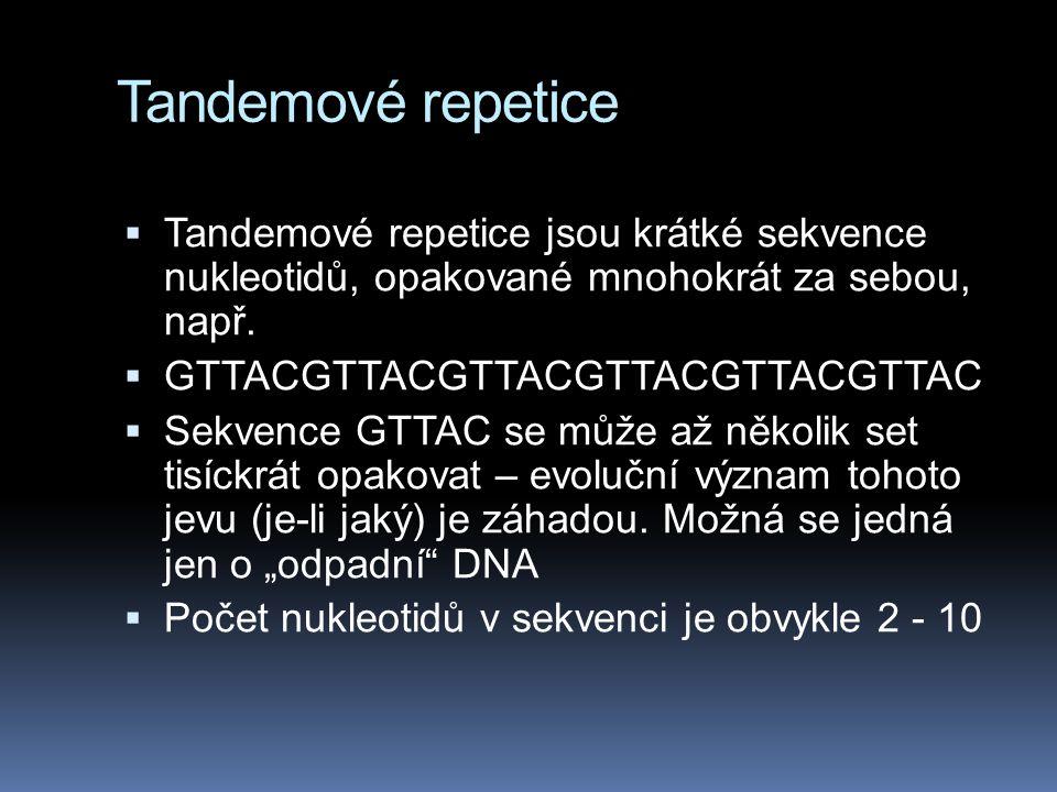 Tandemové repetice Tandemové repetice jsou krátké sekvence nukleotidů, opakované mnohokrát za sebou, např.