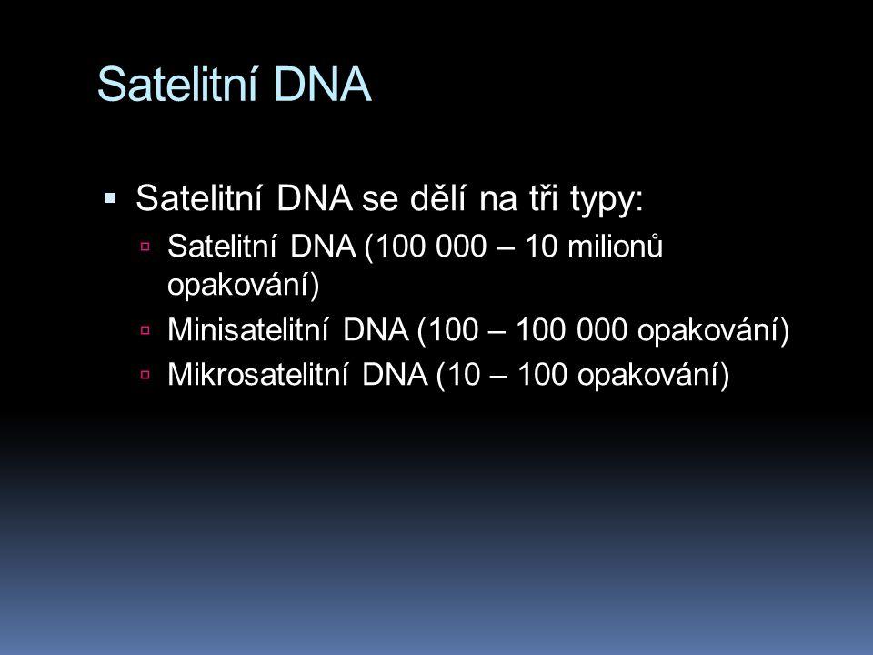 Satelitní DNA Satelitní DNA se dělí na tři typy: