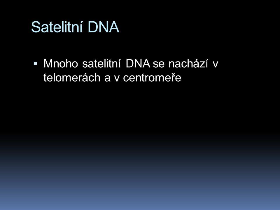 Satelitní DNA Mnoho satelitní DNA se nachází v telomerách a v centromeře