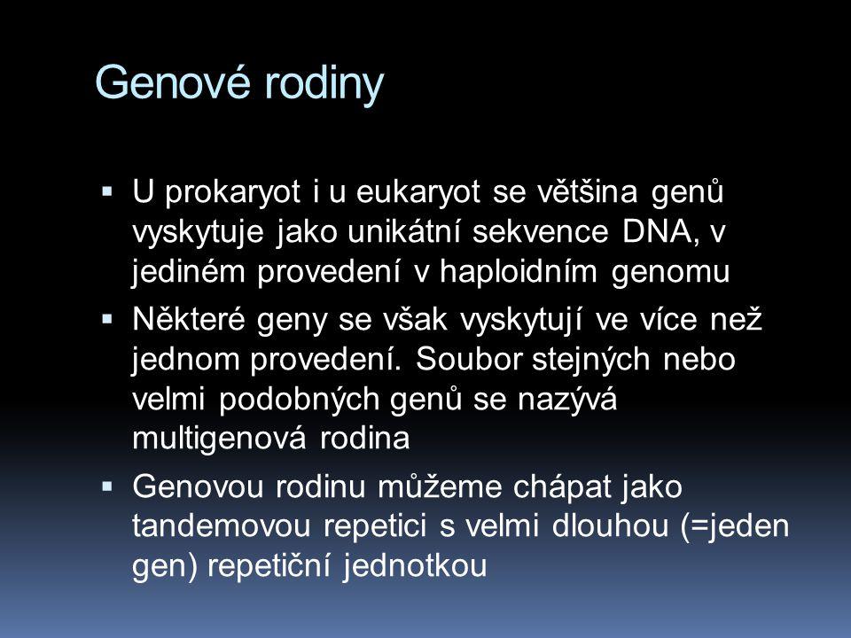 Genové rodiny U prokaryot i u eukaryot se většina genů vyskytuje jako unikátní sekvence DNA, v jediném provedení v haploidním genomu.