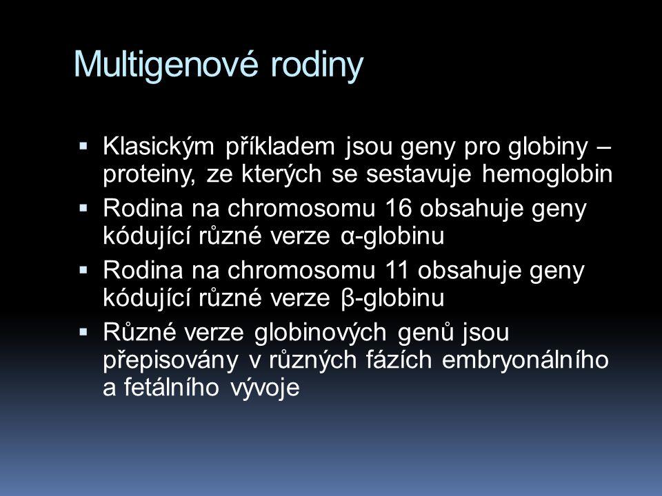 Multigenové rodiny Klasickým příkladem jsou geny pro globiny – proteiny, ze kterých se sestavuje hemoglobin.