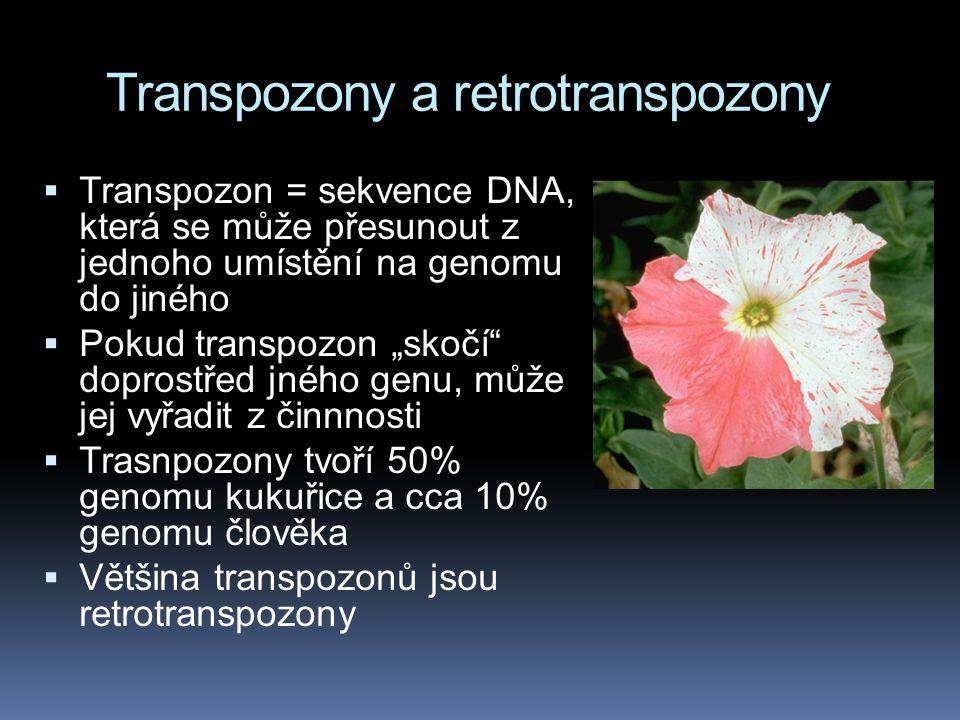 Transpozony a retrotranspozony