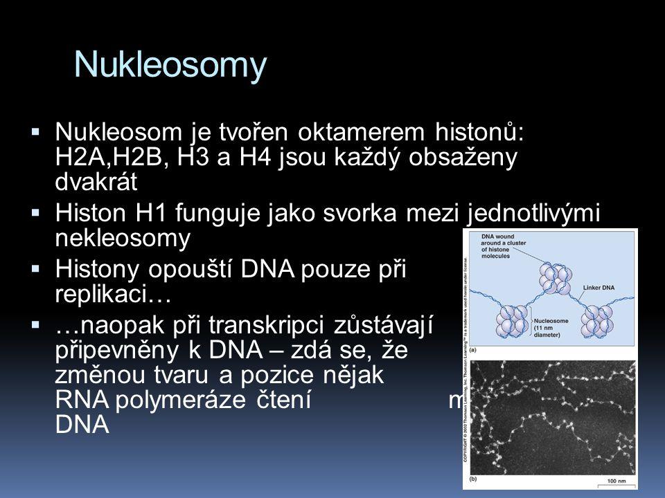 Nukleosomy Nukleosom je tvořen oktamerem histonů: H2A,H2B, H3 a H4 jsou každý obsaženy dvakrát.