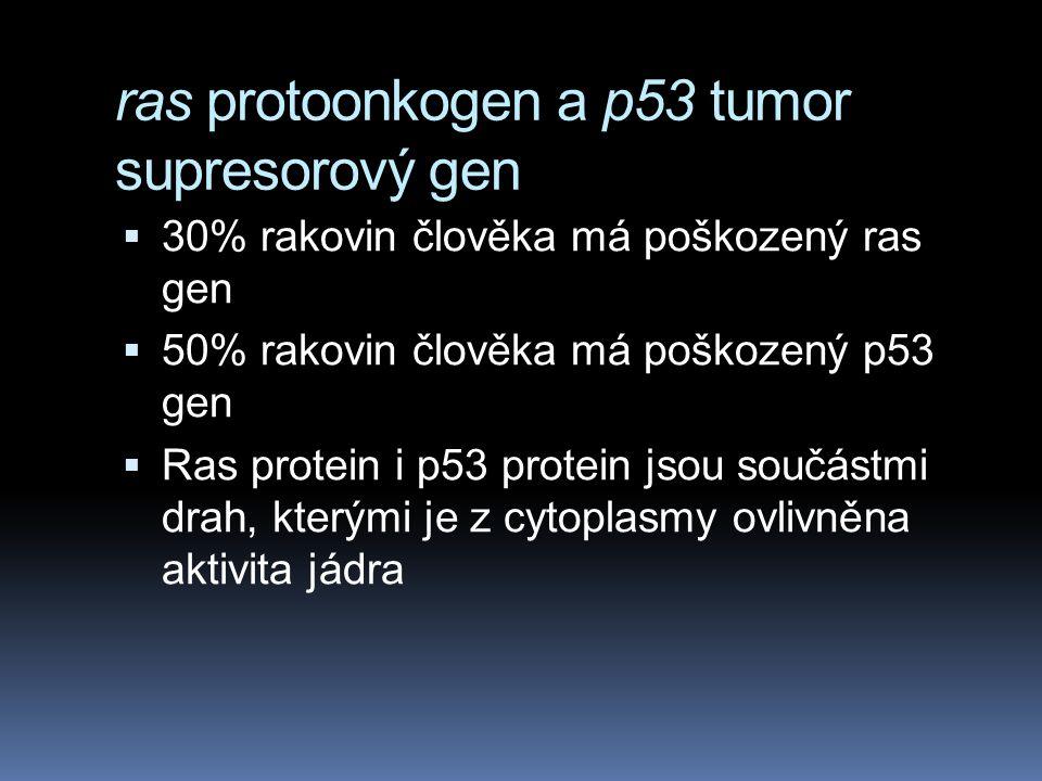 ras protoonkogen a p53 tumor supresorový gen