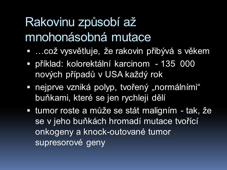 Rakovinu způsobí až mnohonásobná mutace
