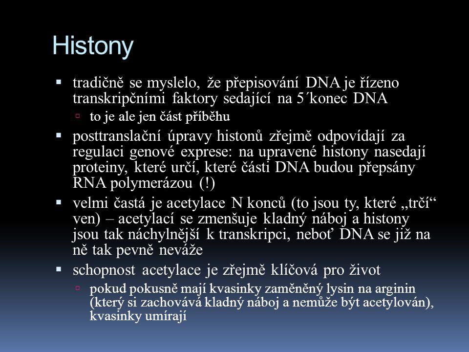 Histony tradičně se myslelo, že přepisování DNA je řízeno transkripčními faktory sedající na 5´konec DNA.