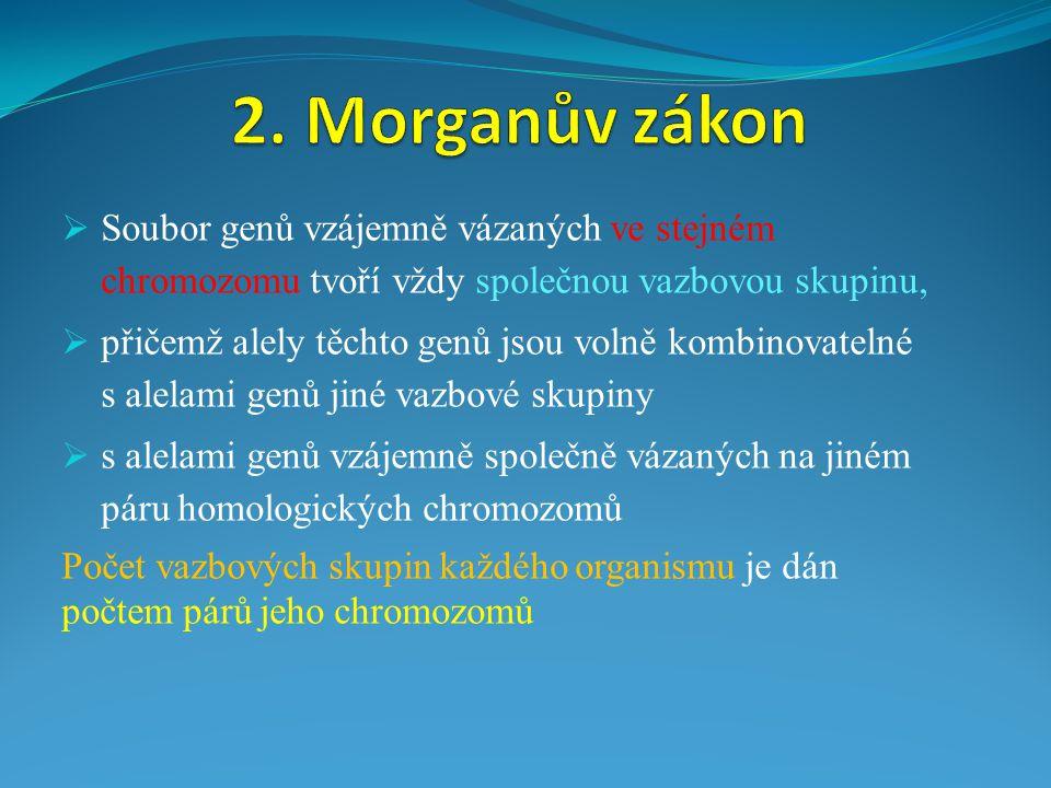 2. Morganův zákon Soubor genů vzájemně vázaných ve stejném chromozomu tvoří vždy společnou vazbovou skupinu,