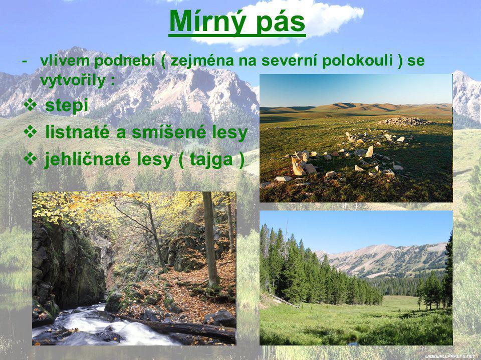 Mírný pás stepi listnaté a smíšené lesy jehličnaté lesy ( tajga )